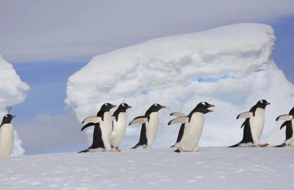 2019年12月圣诞南极阿根廷巴西之旅(23天)
