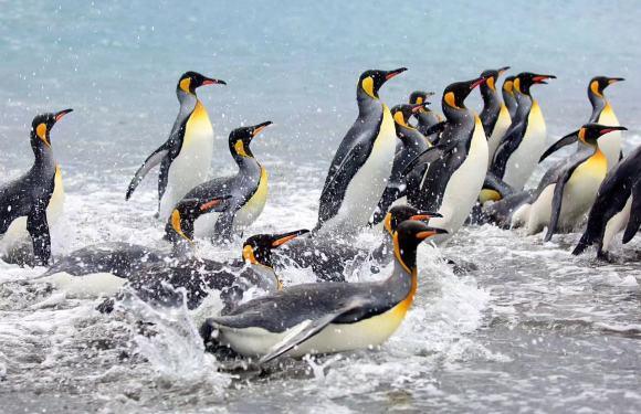 2019年10月大南极王企鹅探索之旅(27天)*准备出发*