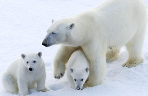 2020年8月北极斯瓦尔巴德群岛+格陵兰深度之旅(20天)