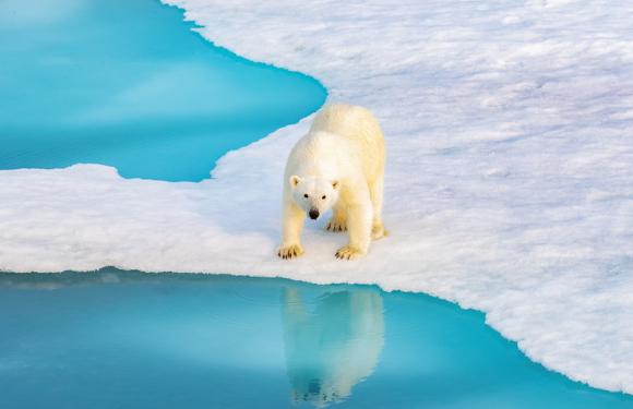 2020年8月北极斯瓦尔巴德群岛+冰岛精华之旅(19天)
