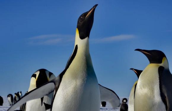 2020年11月南极厚冰区与帝企鹅同住(16天)