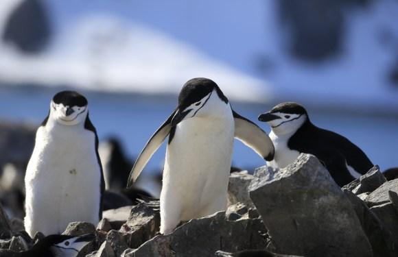 """2021年1月""""一号邮轮""""南极南美新年之旅(17天)"""
