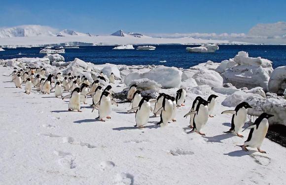 2020年'一号邮轮'经典南极阿根廷巴西之旅(23天)