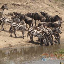 09年肯尼亚九团精彩之旅