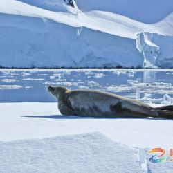 颜国良:南极动物篇