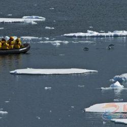 老张:南极七团