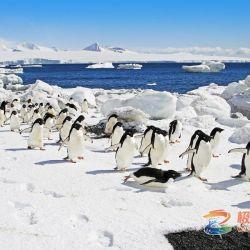 极至南极三岛精彩选集