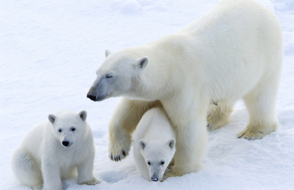 2021年7月北极斯瓦尔巴德群岛+格陵兰深度之旅(20天)